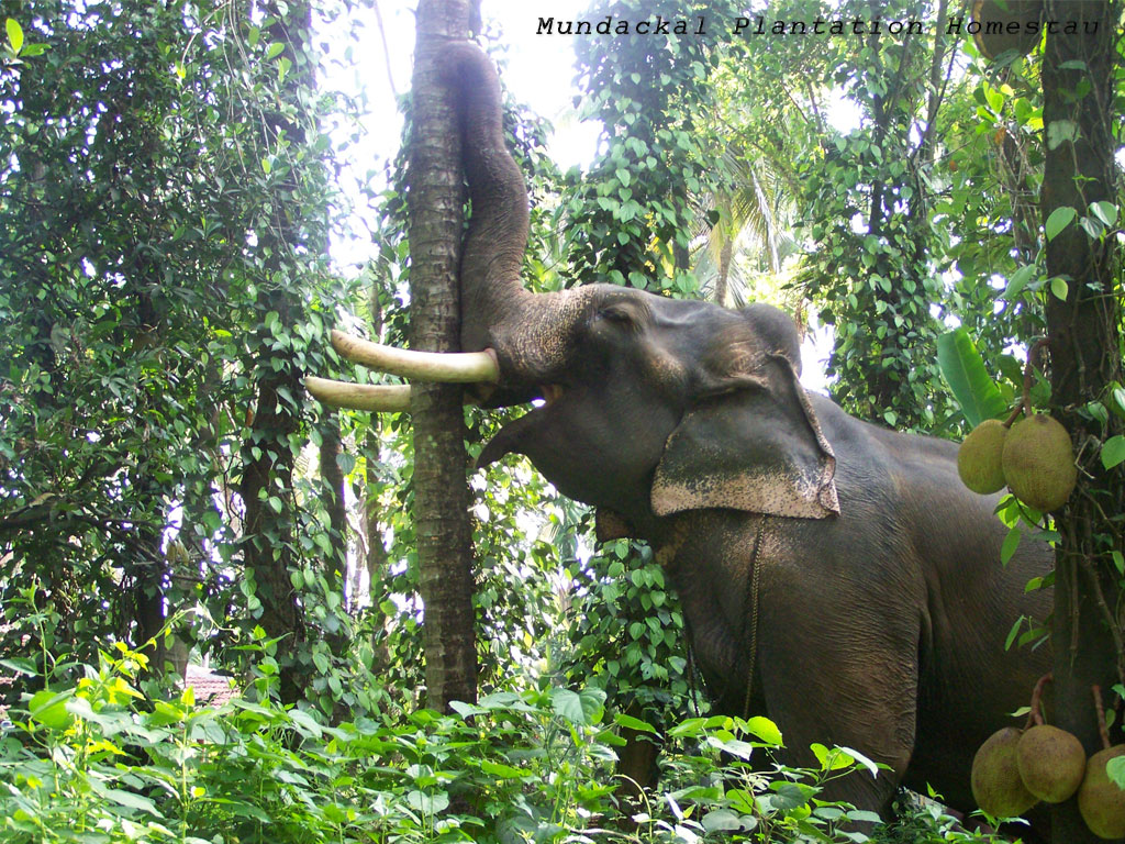 Download kerala wallpapers with elephant