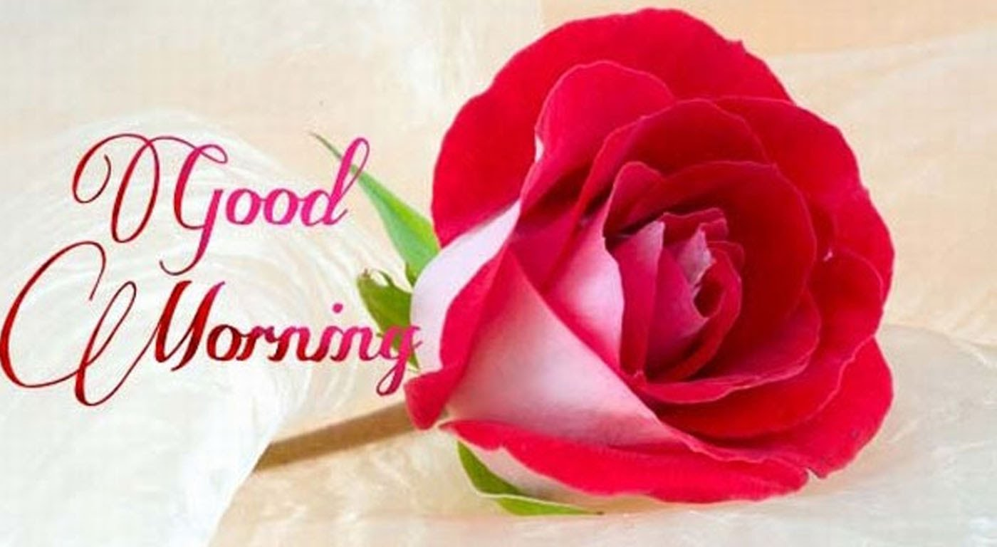 Good Morning Roses Download : Free good morning sms with rose image download