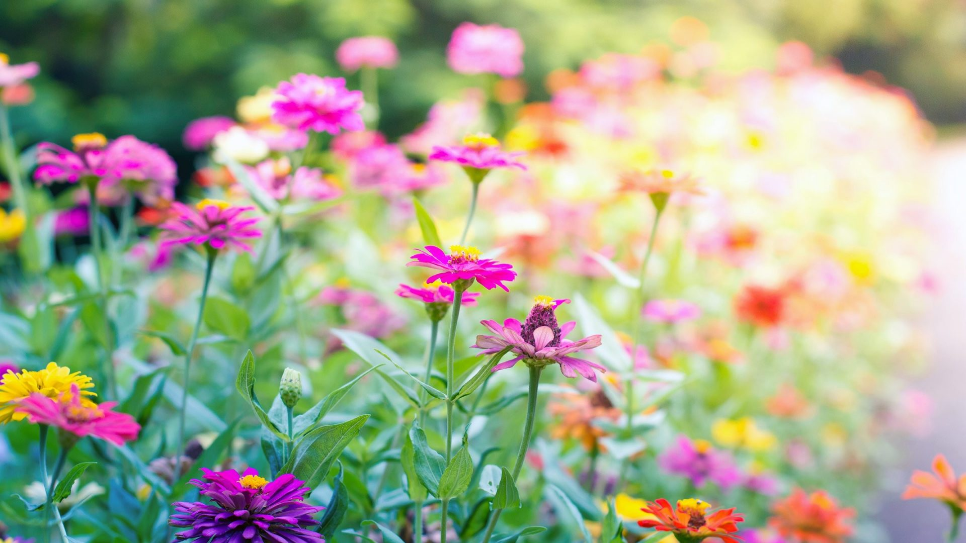 Free desktop wallpaper hd flowers landscape download for Flower landscape
