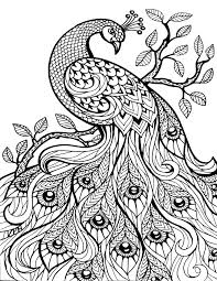Peacock - Printable coloring pages for adults